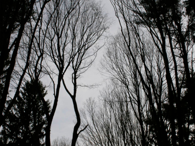 Winter trees-www.PollyCastor.com