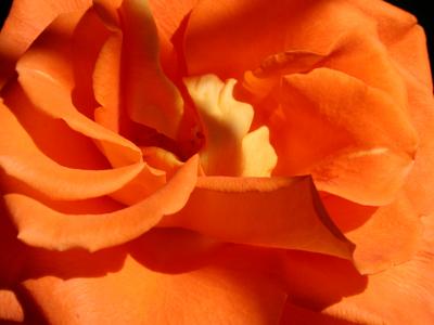 flower-www.PollyCastor.com