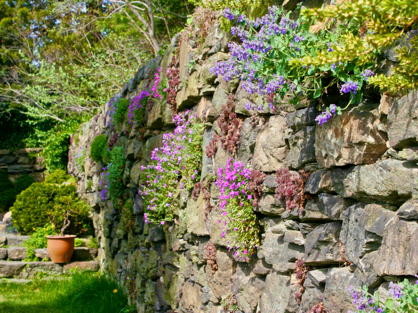 plants for retaining walls
