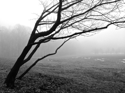 fog in black and White