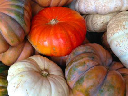 gourd photos
