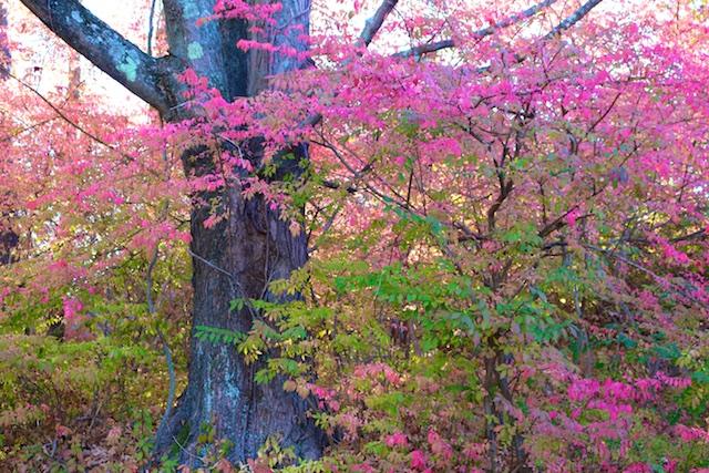 Autumn foliage photos, Connecticut fall photos, autumn in New England, autumn in Connecticut, October foliage, fall trees