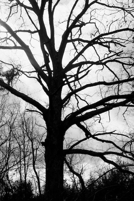 family tree poem