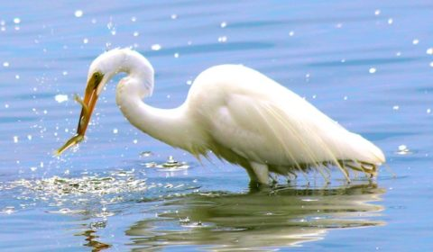 Egret photos
