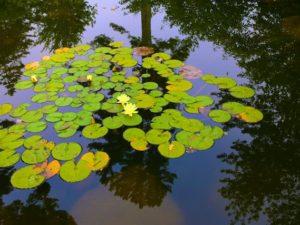 Mid Maine Botanical Gardens