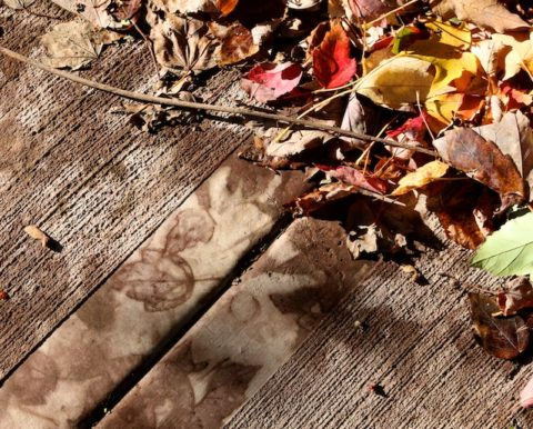 Our Long Sad Brief Season Poem, Poem by Lisa Schwartz