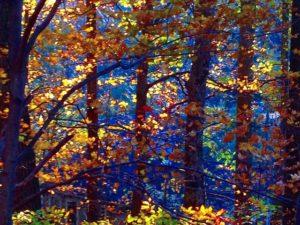 Fall Foliage Photos