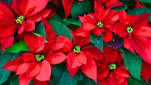 Name the Christmas Carol Puzzle