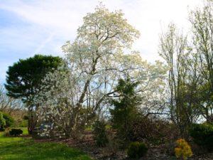 Photos from Secrest Arboretum