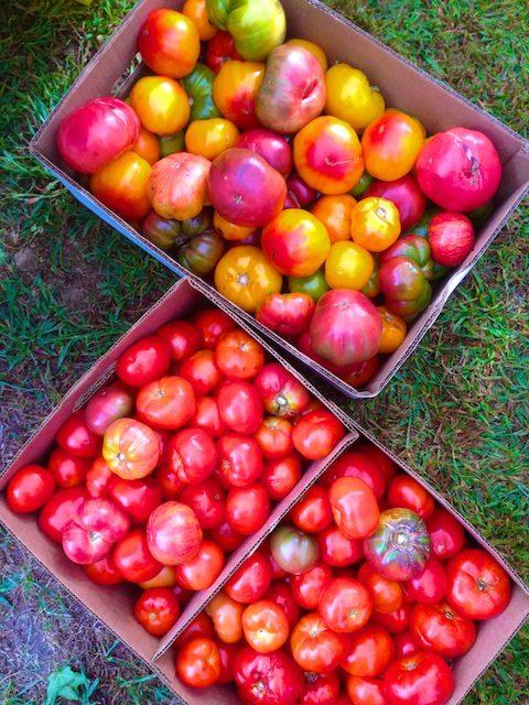 Roasted Tomato Sauce Method