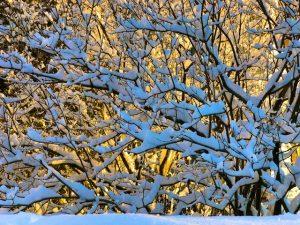Early Morning Snow Photos