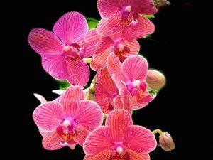 New York Botanical Garden Orchid Show (Photos)