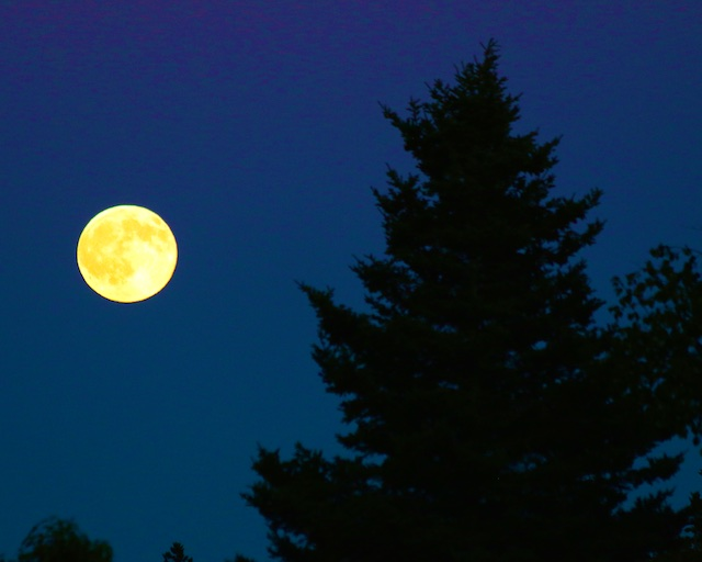 Softly the Moon (Poem by Max Dunaway)