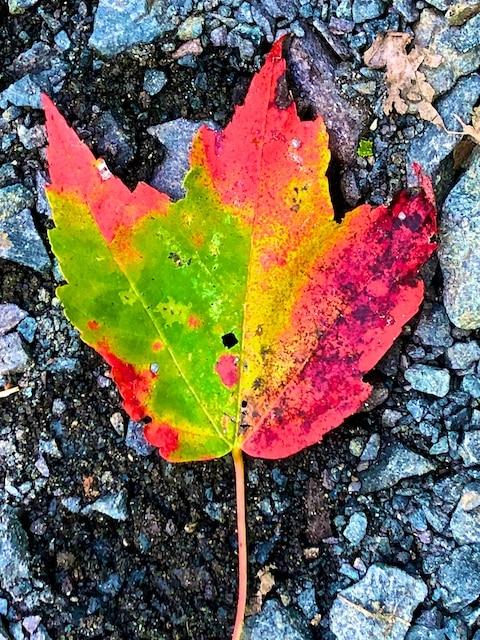 Leaf Litter Photos