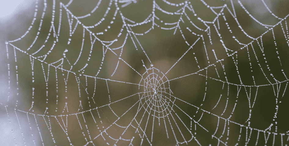 the web (Chief Seattle Quote)