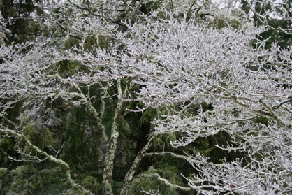 Icy branches-www.PollyCastor.com