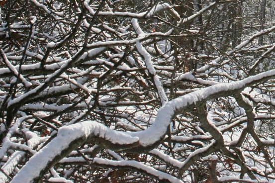 Snow on branches-PollyCastor.com