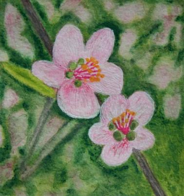 Polly Castor art: peach blossom
