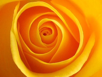 urlsa=i&rct=j&q=yellow+rose&source=images&cd=&cad=rja&docid=Z19KAb63HvWMHM&tbnid=wQroskA3OPpQdM-&ved=0CAUQjRw&url=http3A2F2Fwww.flickr.com2Fcameras2Fcanon2Fpowershot_s5002F&ei=pCg6UoW8LvLC4APv