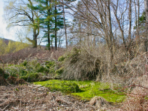 Photos from Early Spring Hikes