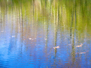 Photos of Early Spring Reflections