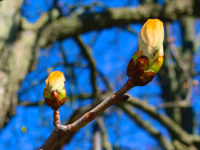 new leaf poem, Polly Castor poetry, spring leaf photos