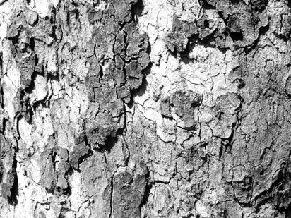 black white photos