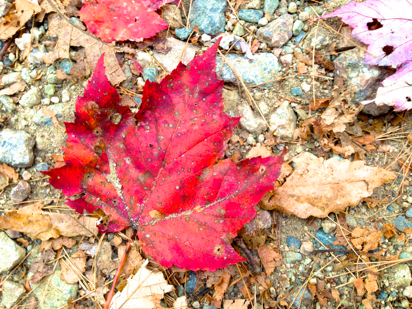 October foliage