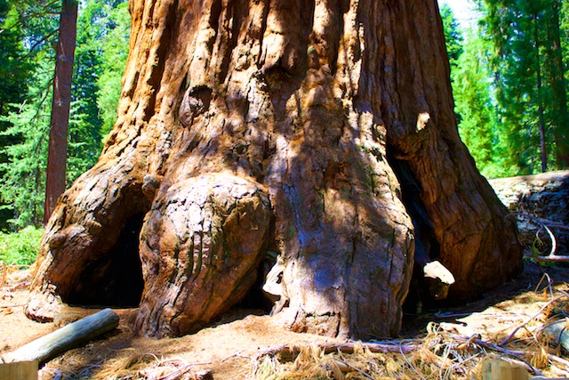 Sequoia National Park photos