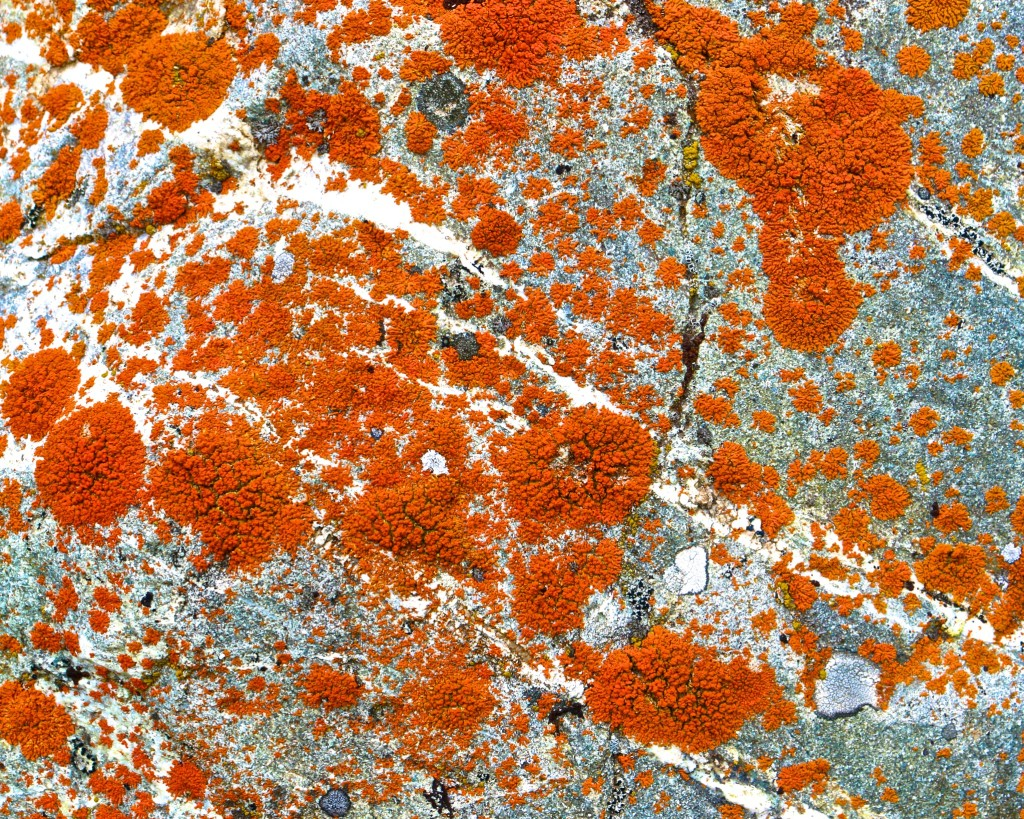 Lichen Photos