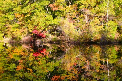 fall reflection photos