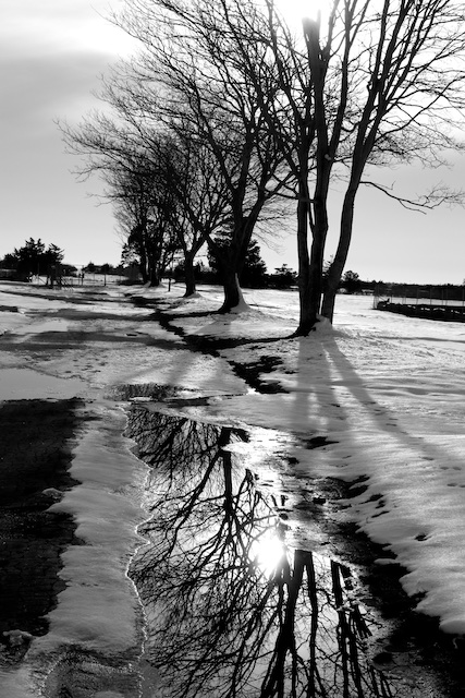 Black & White Photographs by Polly Castor