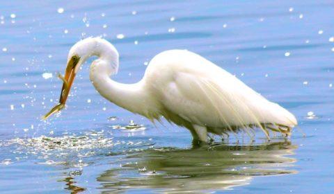 Egret photos