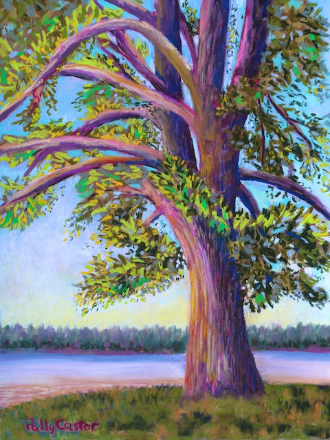 Tree at Camp Newfound (pastel) by Polly Castor