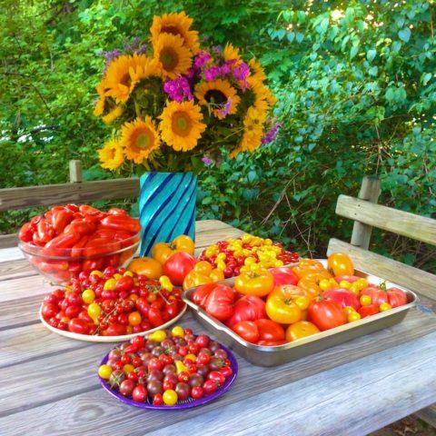 autumn harvest photos