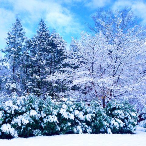 November snow photos