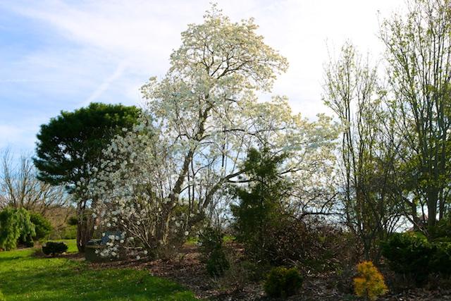 Secrest arboretum photos