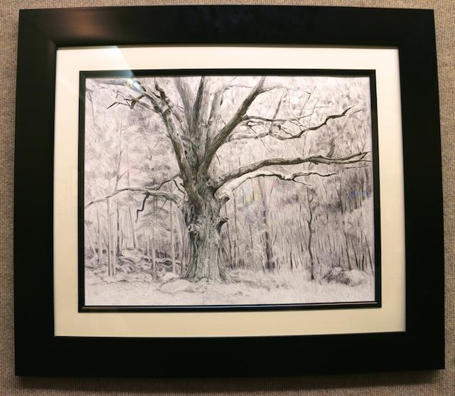 Barbizon Oak (graphite) by Mary Mellot