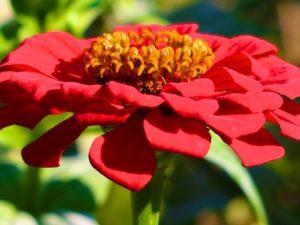 Photos of September Flowers