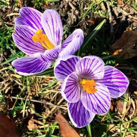 Easter Links