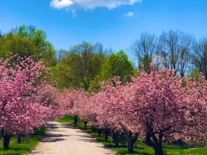 Photos of Spring Trees