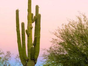 Saguaro Photos