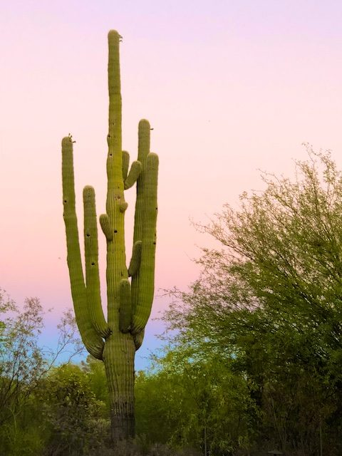 Saguaro Photos