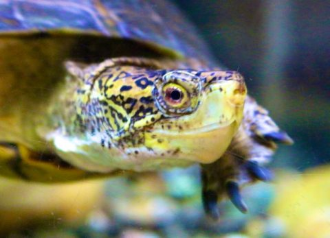 Exemplary Turtles (New poem by Polly Castor)