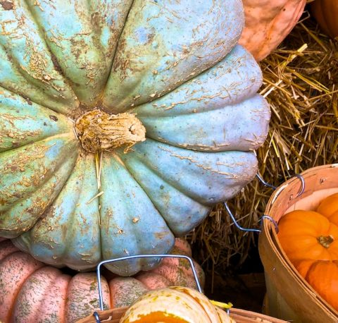 Pumpkin Photos 2018