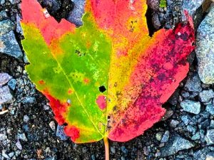 Leaf Litter Photos (& a Lesson on Mindfulness)