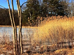 Early February Thaw in Putman Park (Photos)