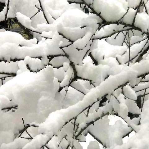 snow photos