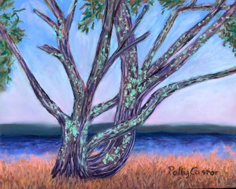 Old Mossy Tree, Kouchibouguac (pastel) by Polly Castor