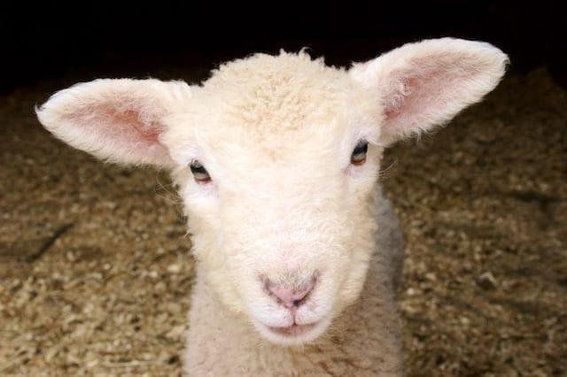the infinite presence of God's shepherding